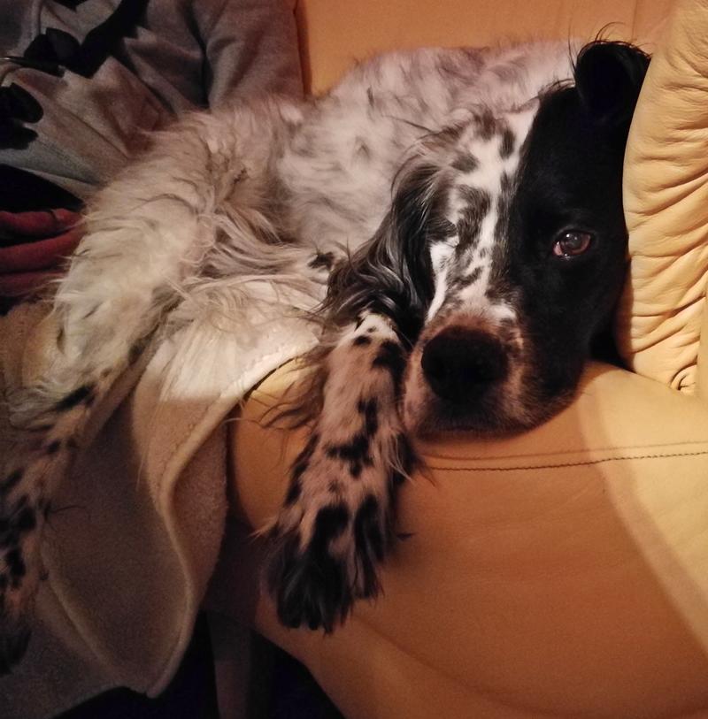 Bildertagebuch - Ginger lebt jetzt als Dauerpflegehund bei ihrer Pflegefamilie 28867750wp