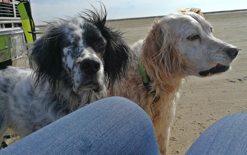 Bildertagebuch - Ginger lebt jetzt als Dauerpflegehund bei ihrer Pflegefamilie 28867753om