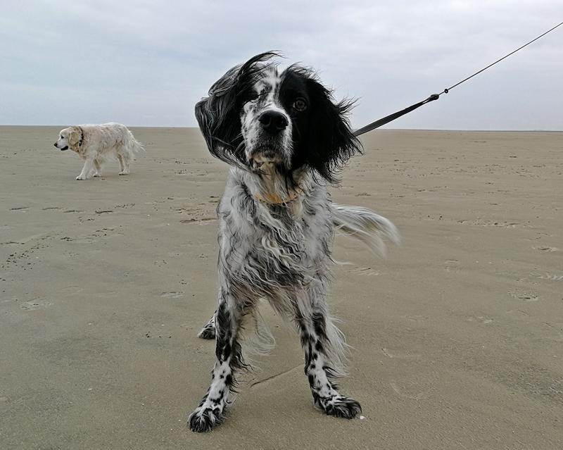 Bildertagebuch - Ginger lebt jetzt als Dauerpflegehund bei ihrer Pflegefamilie 28867754cx