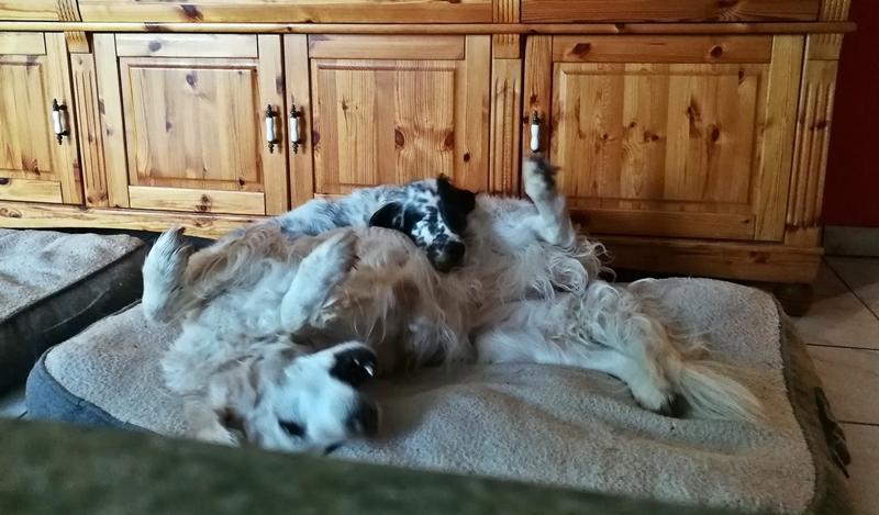 Bildertagebuch - Ginger lebt jetzt als Dauerpflegehund bei ihrer Pflegefamilie 28867755hs