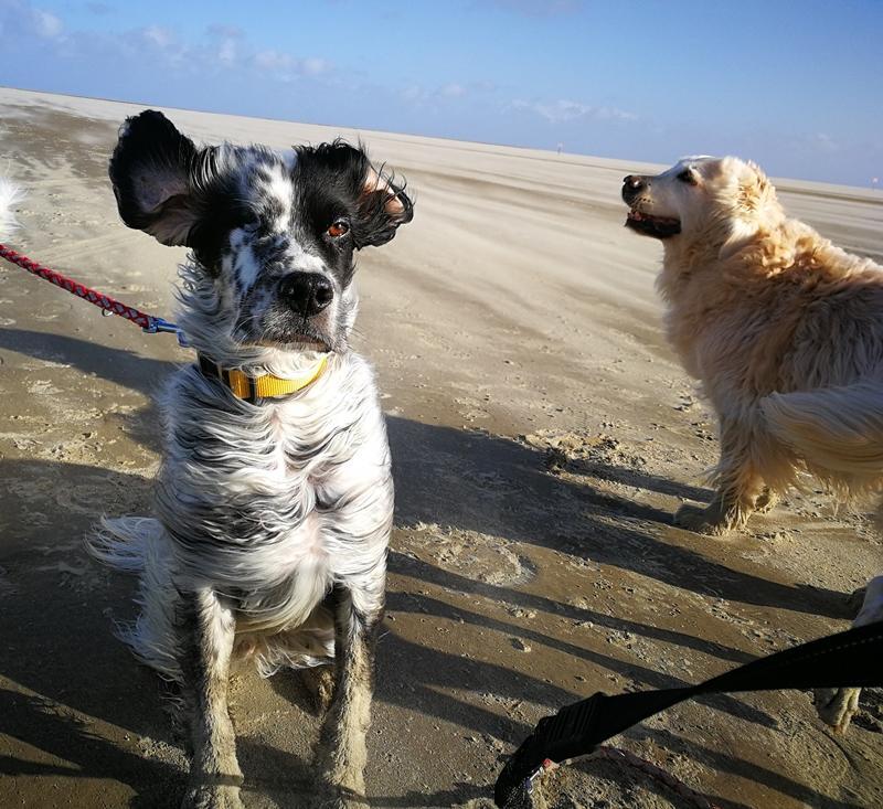 Bildertagebuch - Ginger lebt jetzt als Dauerpflegehund bei ihrer Pflegefamilie 28867757de