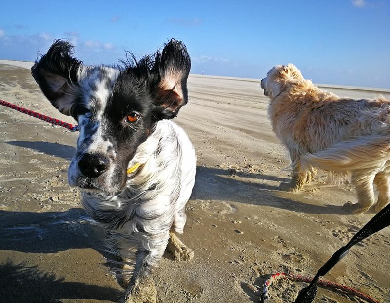 Bildertagebuch - Ginger lebt jetzt als Dauerpflegehund bei ihrer Pflegefamilie 28867758vs