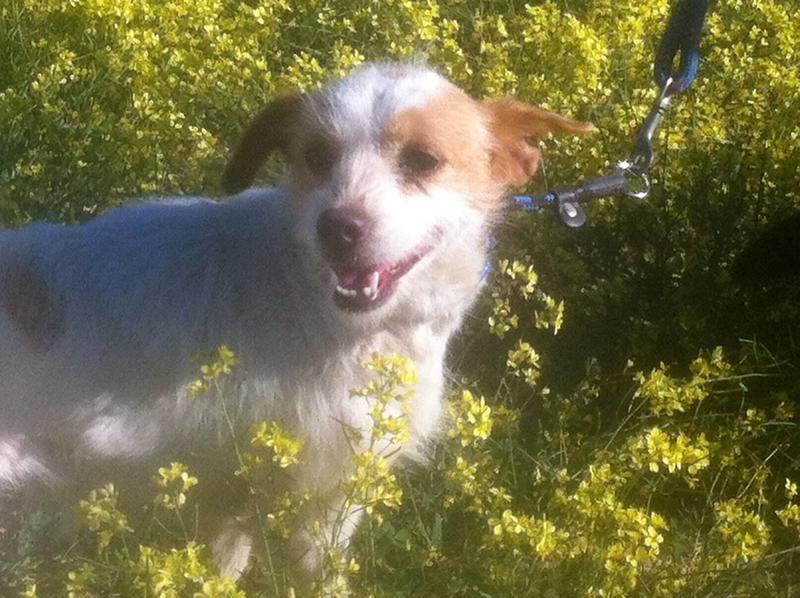 Bildertagebuch - Fleur, eine ganz süße Mini - Maus sucht liebevollen Kuschelplatz ...VERMITTELT! 28889511sj