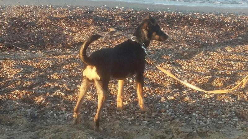 Bildertagebuch - Jazz, ist rundum ein tolles niedliches Hundemädchen... VERMITTELT! 28889859rp