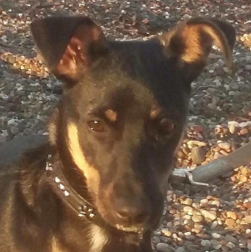 Bildertagebuch - Jazz, ist rundum ein tolles niedliches Hundemädchen... VERMITTELT! 28889863od