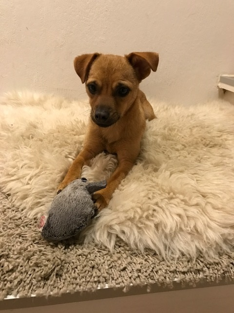 Bildertagebuch - Mia, süßes kleines Mäuschen wurde von der Straße gerettet ... - VERMITTELT! 28957613vt