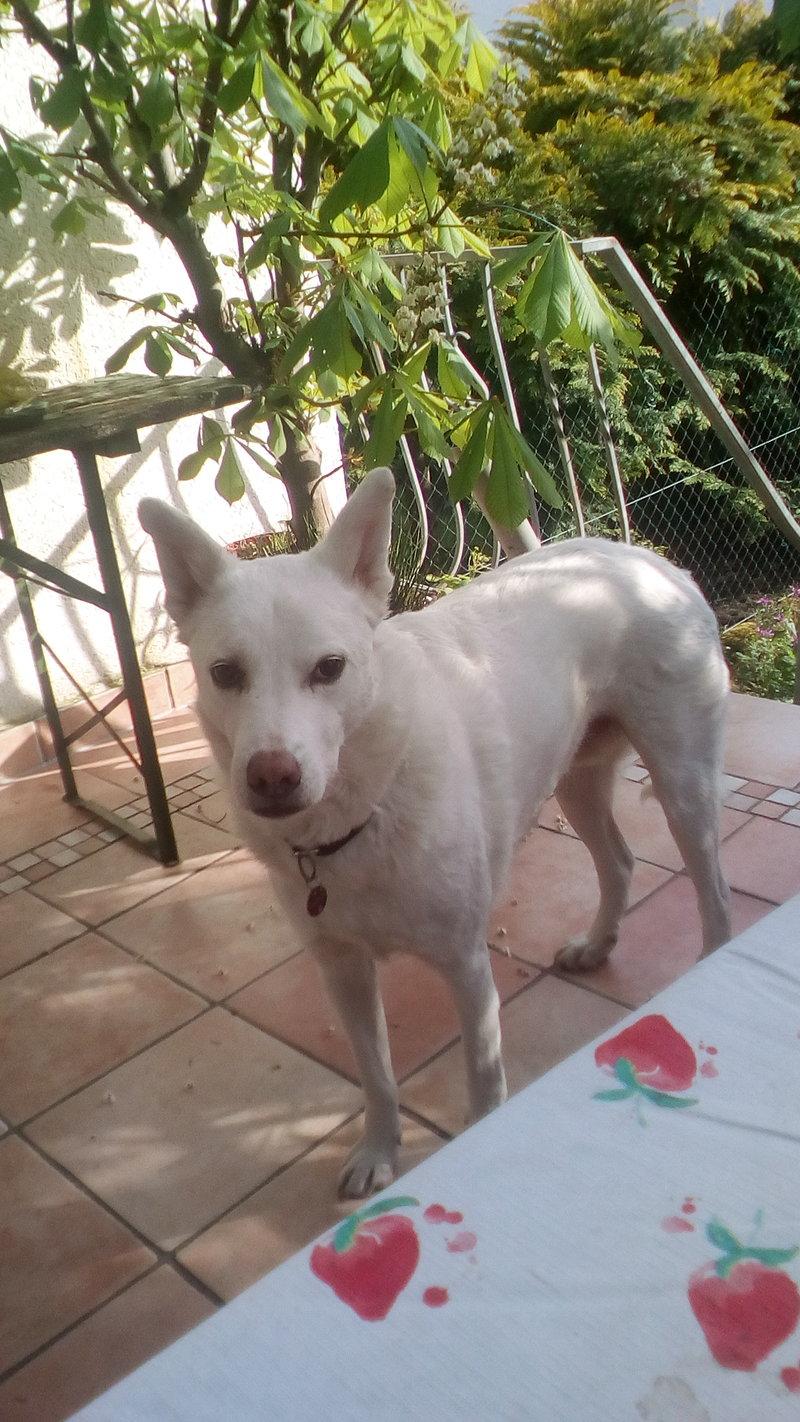 Bildertagebuch - Roccia: Ein wunderbarer, ganz besonderer Hund - VERMITTELT - 29010571vm