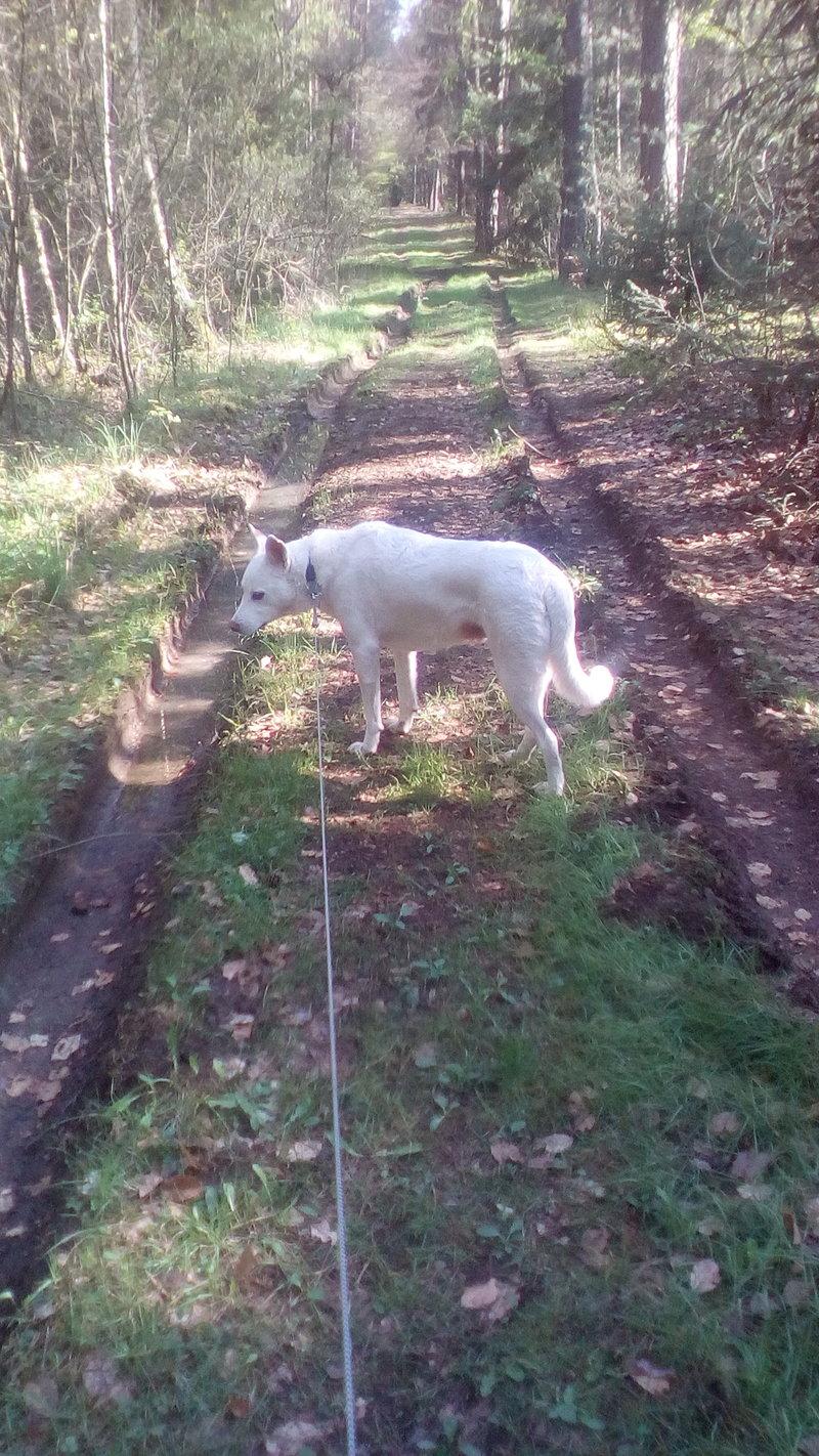 Bildertagebuch - Roccia: Ein wunderbarer, ganz besonderer Hund - VERMITTELT - 29010578sb