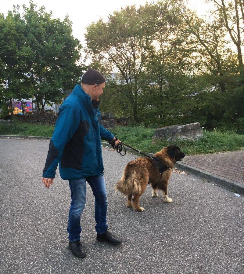 Bildertagebuch - Athena: eine Riesen-Bärin sucht Menschen die den Hirtenhunden verfallen...VERMITTELT! 29045397te