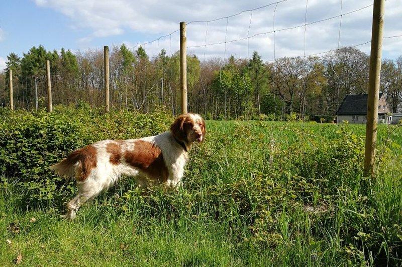 Bildertagebuch - Nela: wünscht sich einen kuschligen Hundekorb, einen vollen Futternapf und liebe Menschen - VERMITTELT! 29069907fx