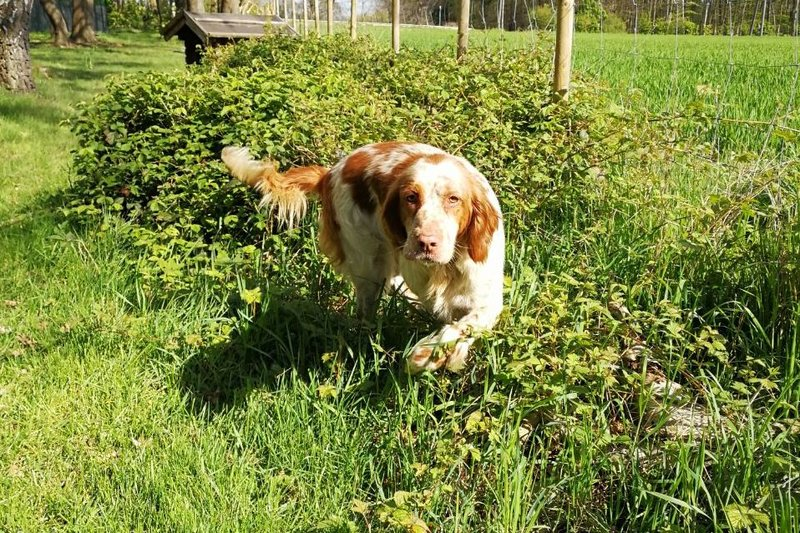 Bildertagebuch - Nela: wünscht sich einen kuschligen Hundekorb, einen vollen Futternapf und liebe Menschen - VERMITTELT! 29069910kk