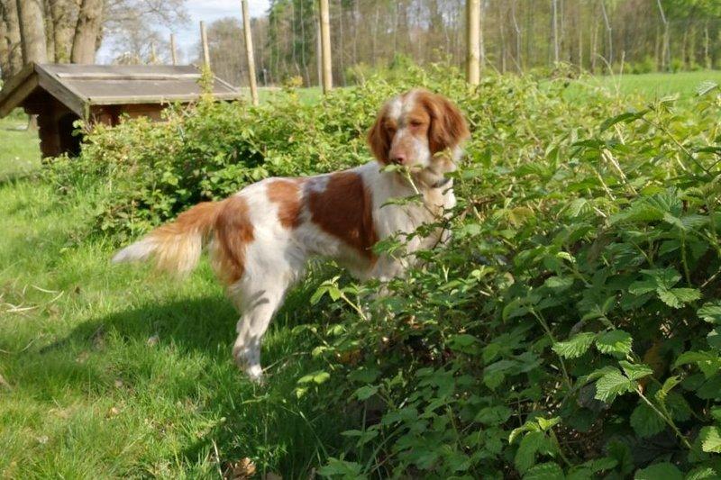 Bildertagebuch - Nela: wünscht sich einen kuschligen Hundekorb, einen vollen Futternapf und liebe Menschen - VERMITTELT! 29069913kq