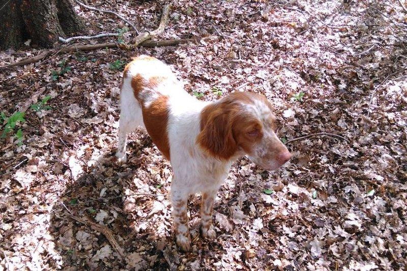 Bildertagebuch - Nela: wünscht sich einen kuschligen Hundekorb, einen vollen Futternapf und liebe Menschen - VERMITTELT! 29069916qj