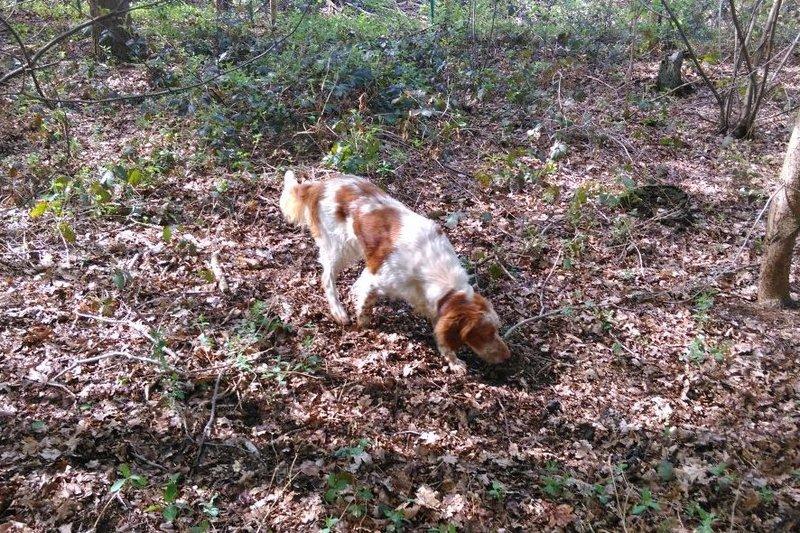 Bildertagebuch - Nela: wünscht sich einen kuschligen Hundekorb, einen vollen Futternapf und liebe Menschen - VERMITTELT! 29069917oh