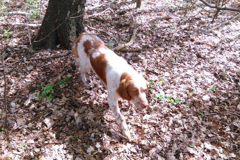 Bildertagebuch - Nela: wünscht sich einen kuschligen Hundekorb, einen vollen Futternapf und liebe Menschen - VERMITTELT! 29069918zl