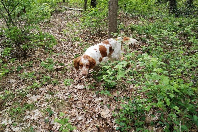 Bildertagebuch - Nela: wünscht sich einen kuschligen Hundekorb, einen vollen Futternapf und liebe Menschen - VERMITTELT! 29069919vo