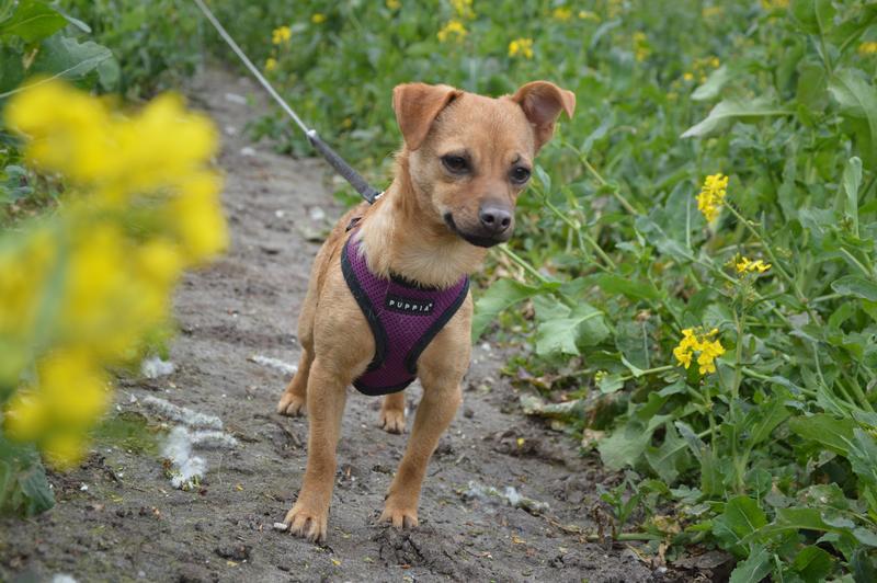 Bildertagebuch - Mia, süßes kleines Mäuschen wurde von der Straße gerettet ... - VERMITTELT! 29084985yb