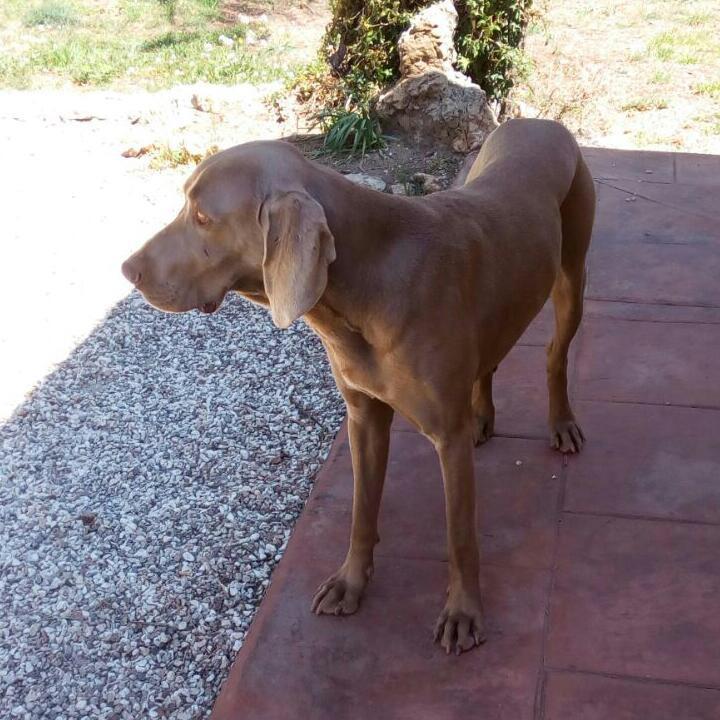 Bildertagebuch - Escubi, ein kluges Köpfchen möchte ein absoluter Traumhund werden ...ZUHAUSE in SPANIEN GEFUNDEN! 29086652rb