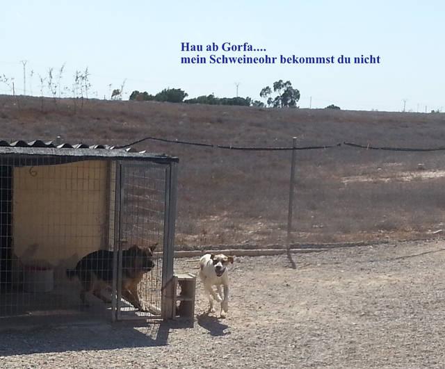 Bildertagebuch - Luke: ein wunderbarer Schäferhund sucht sein Sofa - VERMITTELT! 29094017du