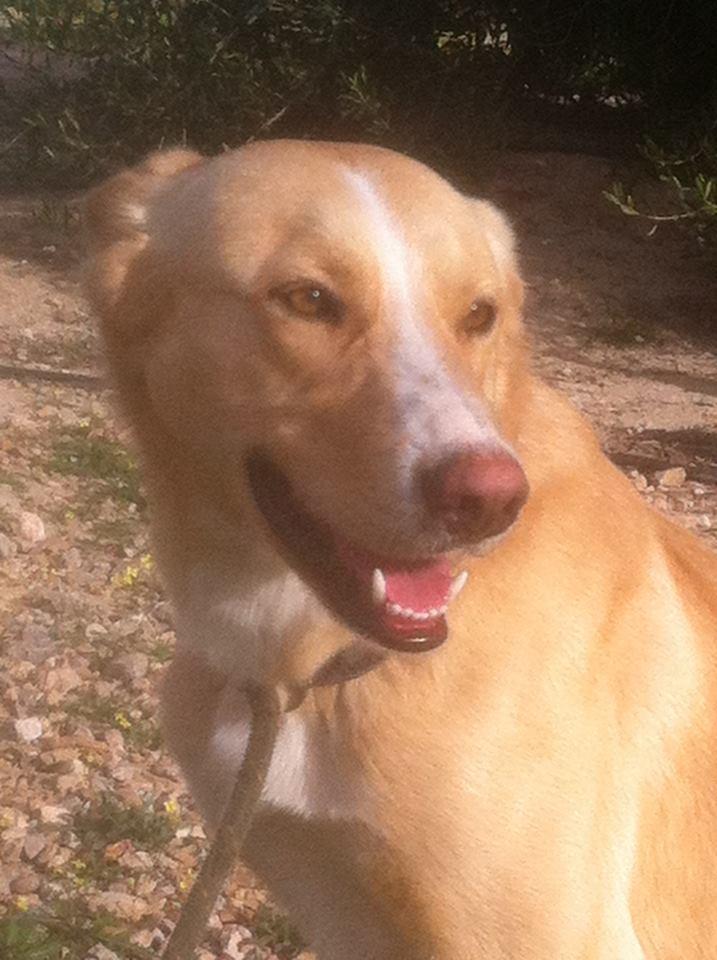 Bildertagebuch - Romeo  II, ist ein echter Darling einfach ein Traum von Hundebub ...VERMITTELT! 29152777pg