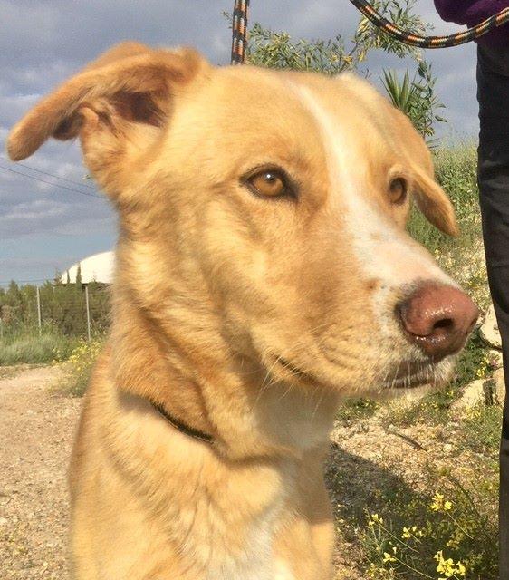 Bildertagebuch - Romeo  II, ist ein echter Darling einfach ein Traum von Hundebub ...VERMITTELT! 29152779pa