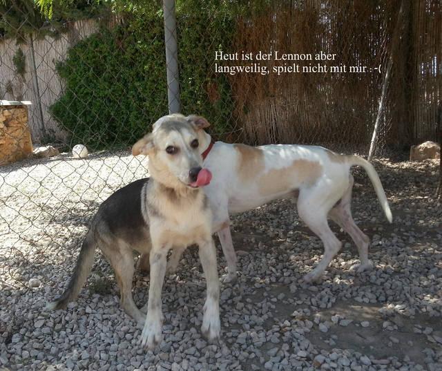 Bildertagebuch -  Holly: junges und lebensfrohes Hundemädchen sucht ihr Zuhause...VERMITTELT! 29178167ya