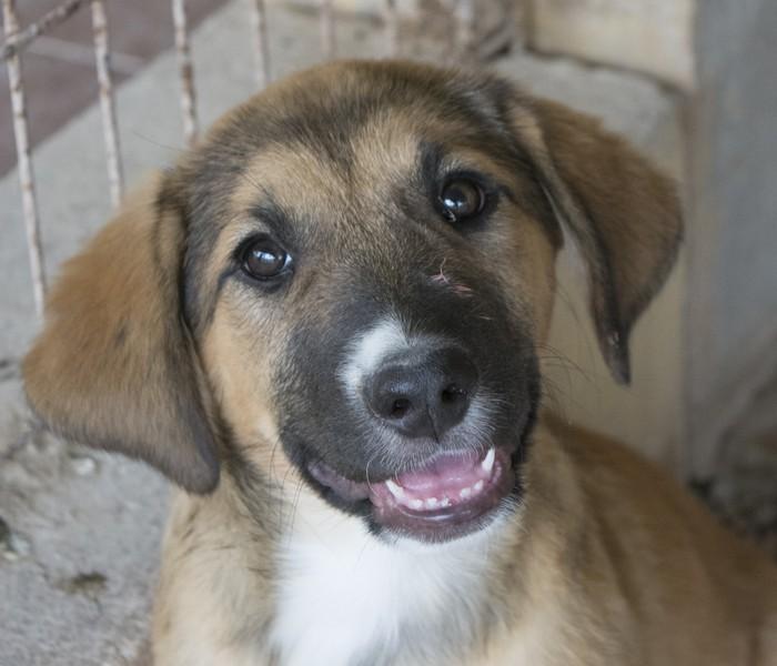 Bildertagebuch - Dina: wurde als Hundebaby wie Müll entsorgt, sie sollte sterben...VERMITTELT! 29180643xj