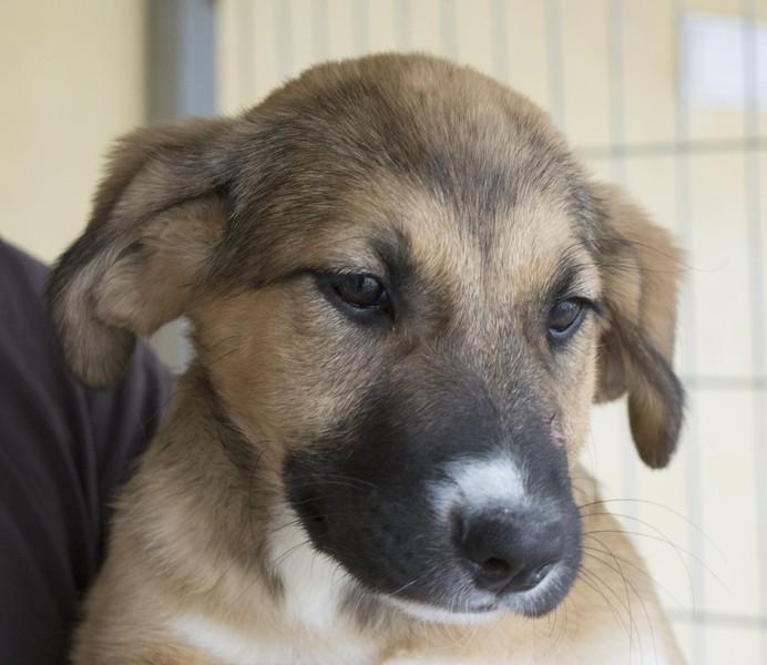 Bildertagebuch - Dina: wurde als Hundebaby wie Müll entsorgt, sie sollte sterben...VERMITTELT! 29180648zm