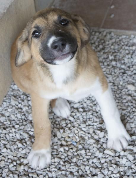 Bildertagebuch - Dina: wurde als Hundebaby wie Müll entsorgt, sie sollte sterben...VERMITTELT! 29180650xh