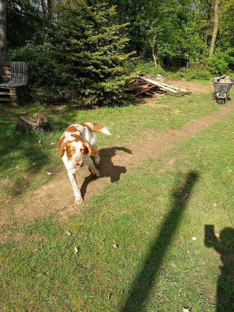 Bildertagebuch - Nela: wünscht sich einen kuschligen Hundekorb, einen vollen Futternapf und liebe Menschen - VERMITTELT! 29216265pd