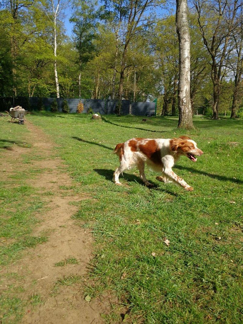 Bildertagebuch - Nela: wünscht sich einen kuschligen Hundekorb, einen vollen Futternapf und liebe Menschen - VERMITTELT! 29216267wl