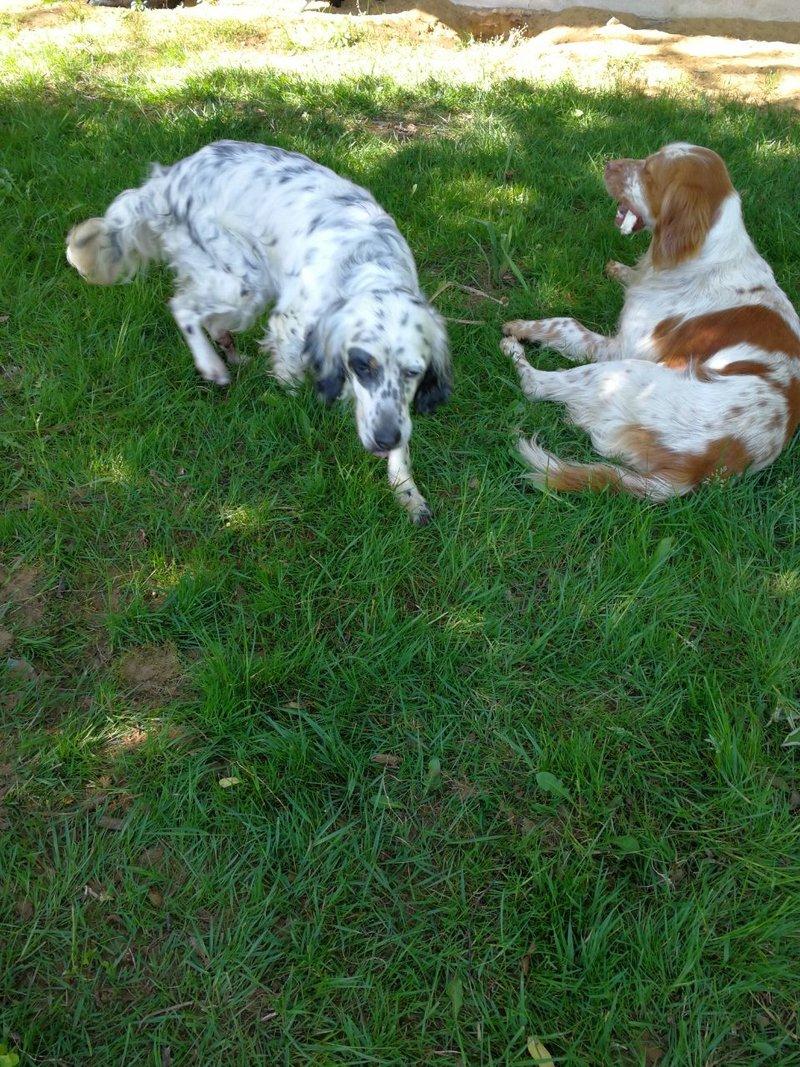Bildertagebuch - Nela: wünscht sich einen kuschligen Hundekorb, einen vollen Futternapf und liebe Menschen - VERMITTELT! 29216270py