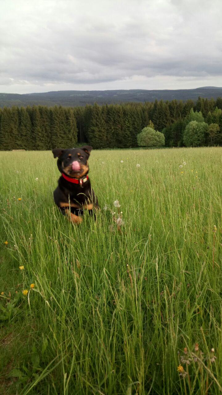 Bildertagebuch - Bella: eine fröhliche Zaubermaus, die mal hoch hinaus will - VERMITTELT! 29294744ck