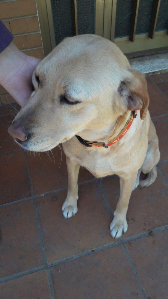Bildertagebuch - Molly: liebevolle, junge Hundemami ist nun bereit für einen neuen Start, vielleicht mit Ihnen?über ANDERE ORGA VERMITTELT! 29370679ou