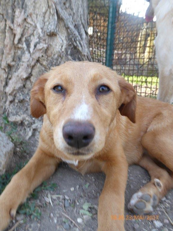 Bildertagebuch - Queen: süßes Hunde- Teeny- Mädel sucht ihre Familie- über ANDERE ORGA VERMITTELT! 29370851bo