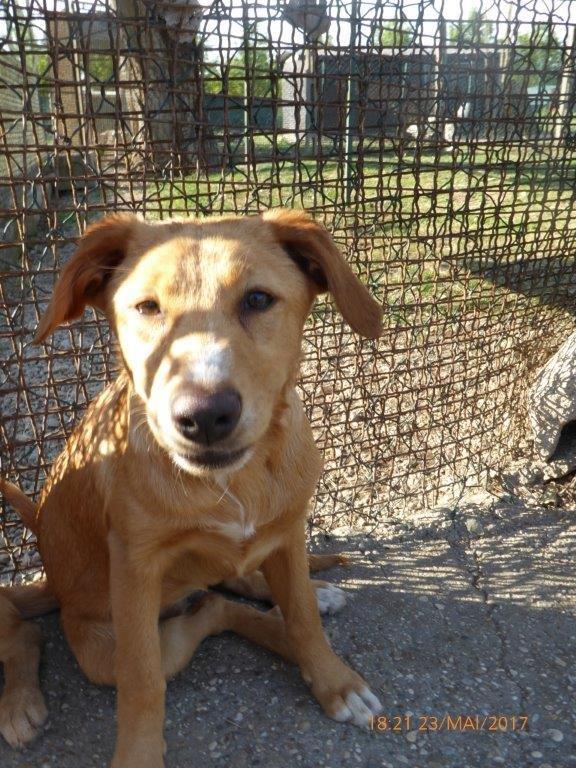 Bildertagebuch - Queen: süßes Hunde- Teeny- Mädel sucht ihre Familie- über ANDERE ORGA VERMITTELT! 29370852ba