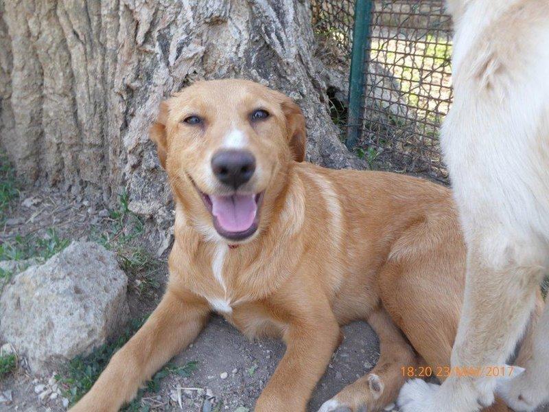 Bildertagebuch - Queen: süßes Hunde- Teeny- Mädel sucht ihre Familie- über ANDERE ORGA VERMITTELT! 29370854ac