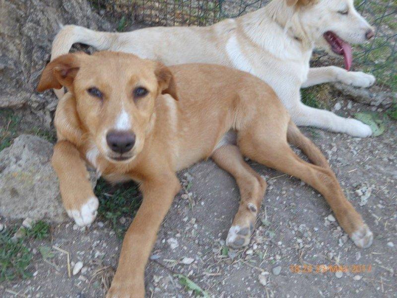 Bildertagebuch - Queen: süßes Hunde- Teeny- Mädel sucht ihre Familie- über ANDERE ORGA VERMITTELT! 29370855lt