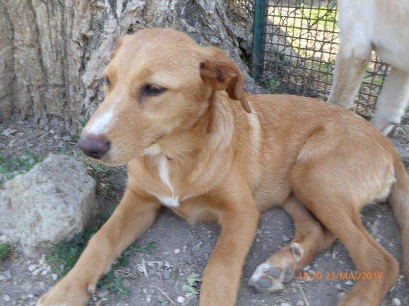 Bildertagebuch - Queen: süßes Hunde- Teeny- Mädel sucht ihre Familie- über ANDERE ORGA VERMITTELT! 29370856tq