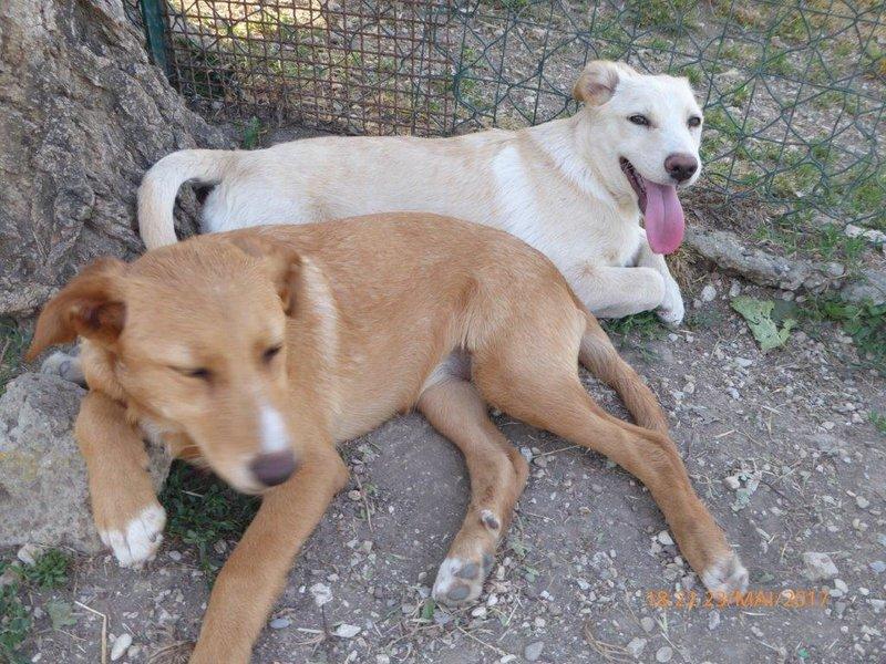 Bildertagebuch - Queen: süßes Hunde- Teeny- Mädel sucht ihre Familie- über ANDERE ORGA VERMITTELT! 29370858lu