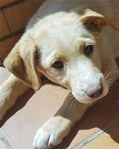 Bildertagebuch - Meggy: junges Hundemädchen träumt vom Glück mit einer eigenen Familie- über ANDERE ORGA VERMITTELT! 29370934ob