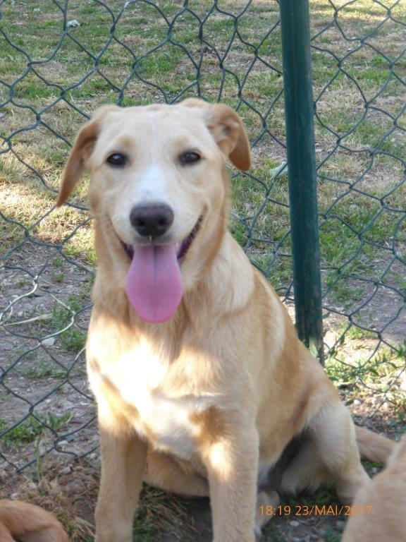 Bildertagebuch - Meggy: junges Hundemädchen träumt vom Glück mit einer eigenen Familie- über ANDERE ORGA VERMITTELT! 29370936vw