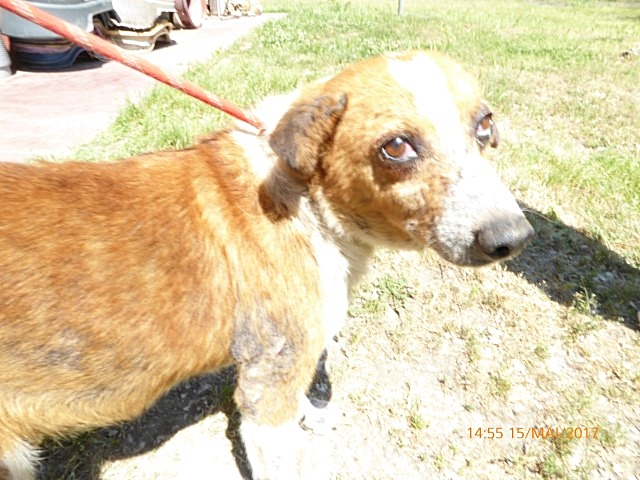 Bildertagebuch - Elio, einer der traurigsten Hunde der Welt braucht dringend Hilfe...Vermittlung über Procanalba... 29371103kk