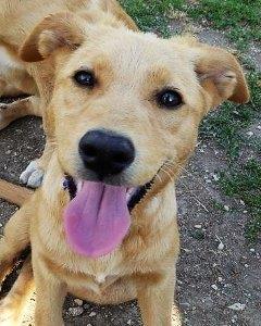 Bildertagebuch - Belle: junges Hunde- Fräulein wünscht eine eigene Familie...VERMITTELT! 29371388vm