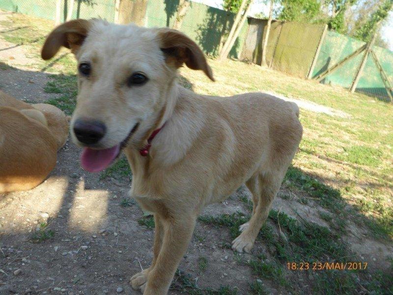 Bildertagebuch - Belle: junges Hunde- Fräulein wünscht eine eigene Familie...VERMITTELT! 29371390th