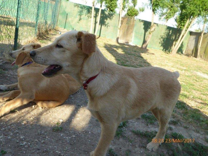 Bildertagebuch - Belle: junges Hunde- Fräulein wünscht eine eigene Familie...VERMITTELT! 29371394yt