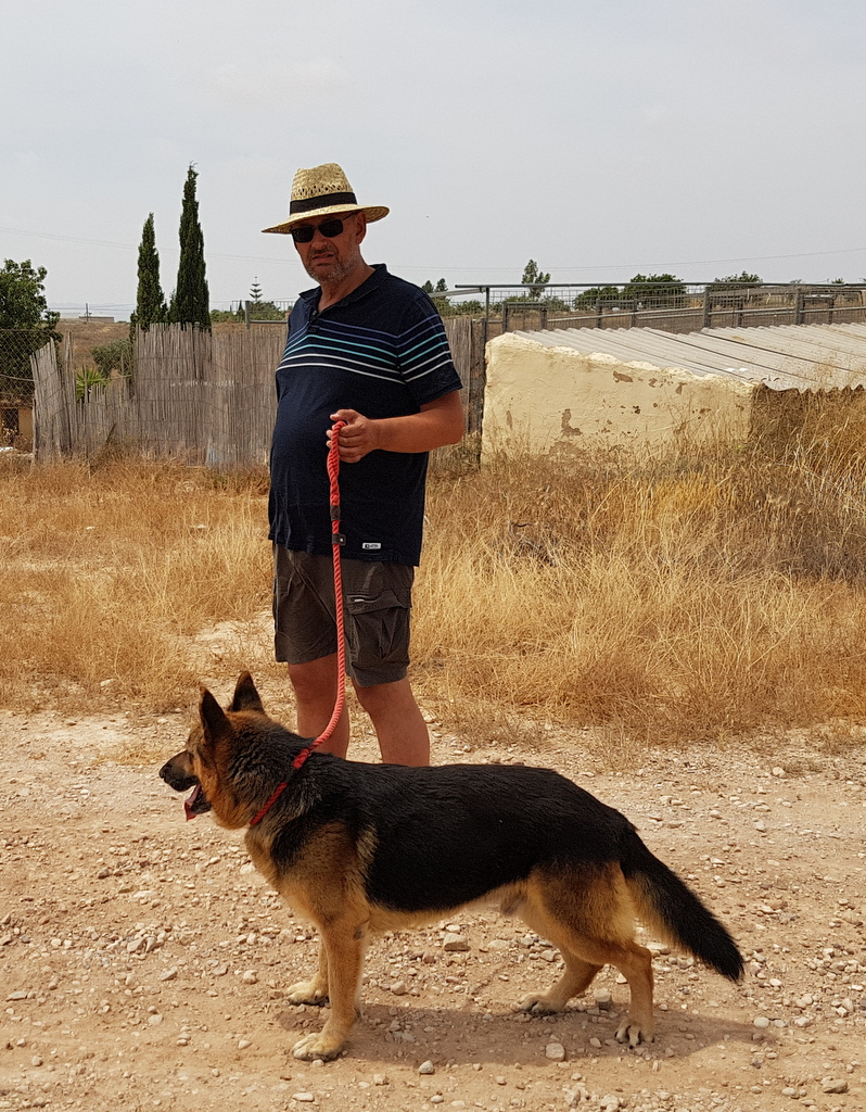 Bildertagebuch - Luke: ein wunderbarer Schäferhund sucht sein Sofa - VERMITTELT! 29481758zv