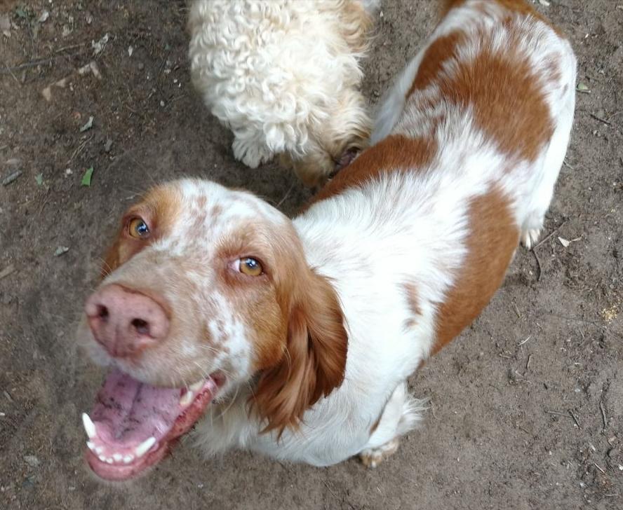Bildertagebuch - Nela: wünscht sich einen kuschligen Hundekorb, einen vollen Futternapf und liebe Menschen - VERMITTELT! 29504359jp
