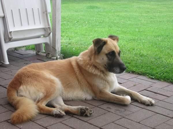 Bildertagebuch - Kiana, wunderschöne freundliche Hundedame ... eine Freundin fürs Leben - VERMITTELT! 29657142gw
