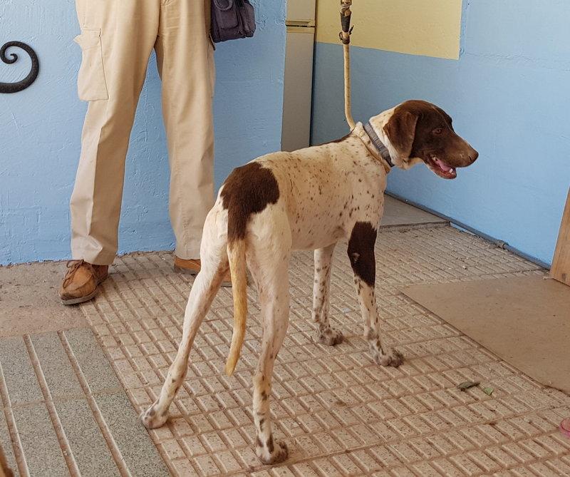Bildertagebuch - Guiness: ein Hundekumpel fürs Leben - VERMITTELT - 29699992vj